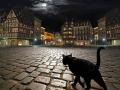 catphotographycatscitynight-66efc664bb9e64fc4504d4600fa23f86_h